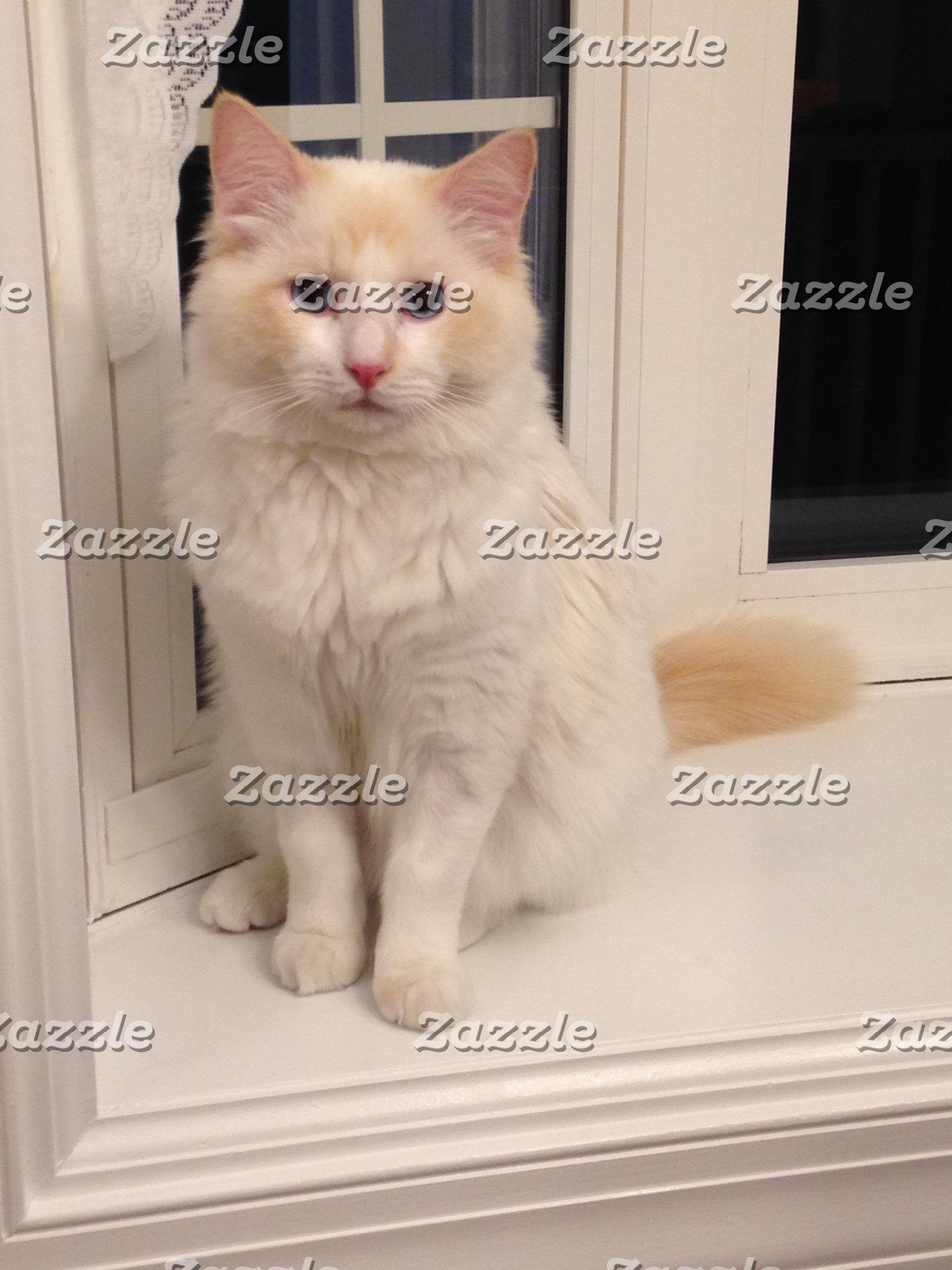 Red Point Ragdoll Cat Sitting Pretty