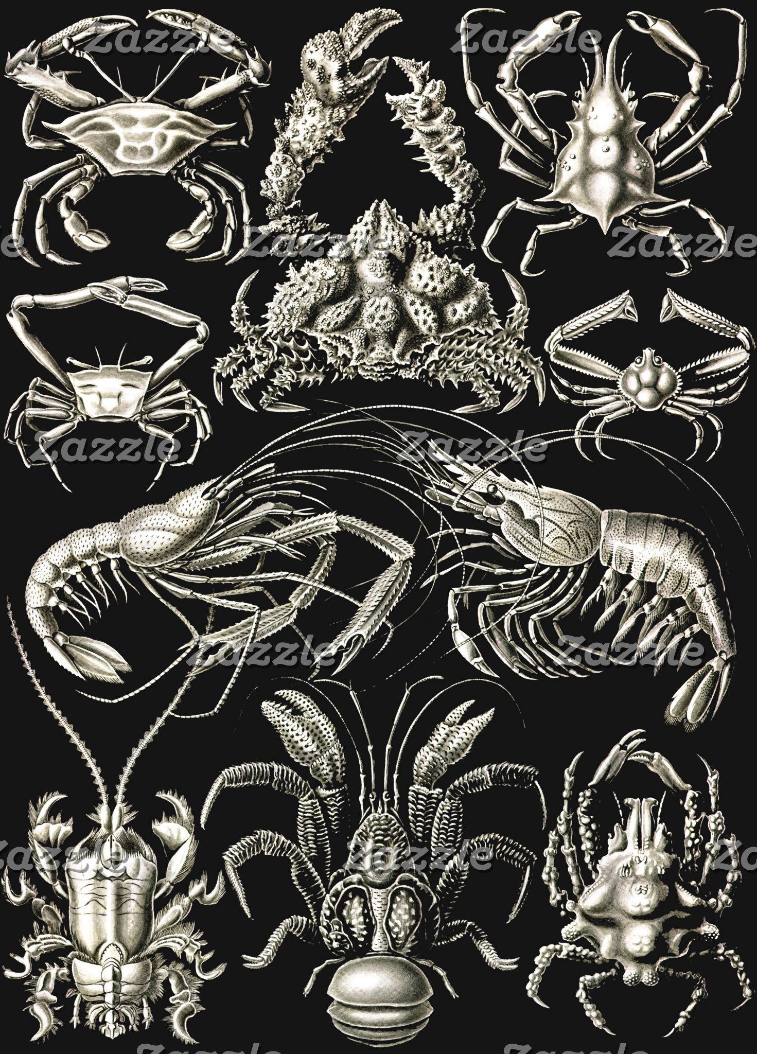 Ernst Haeckel Decapoda