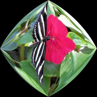 Birds & Butterflies Collections
