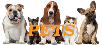 Pets and Pet Lovers