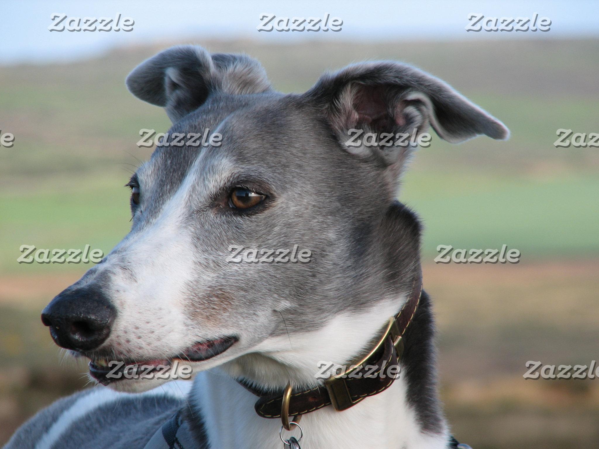 Greyhound postcards