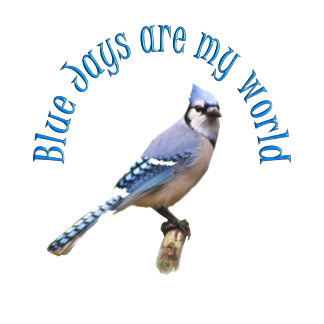 Blue Jays are my World
