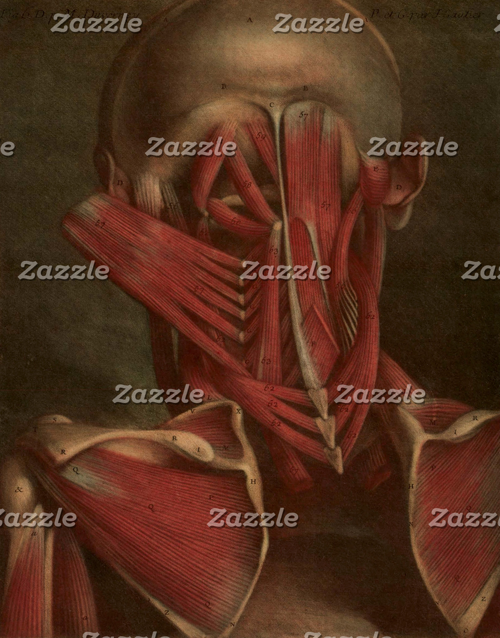 Vintage Anatomy | Neck and Shoulders Muscles