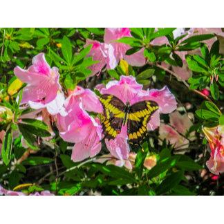 Pink Flower & Butterfly
