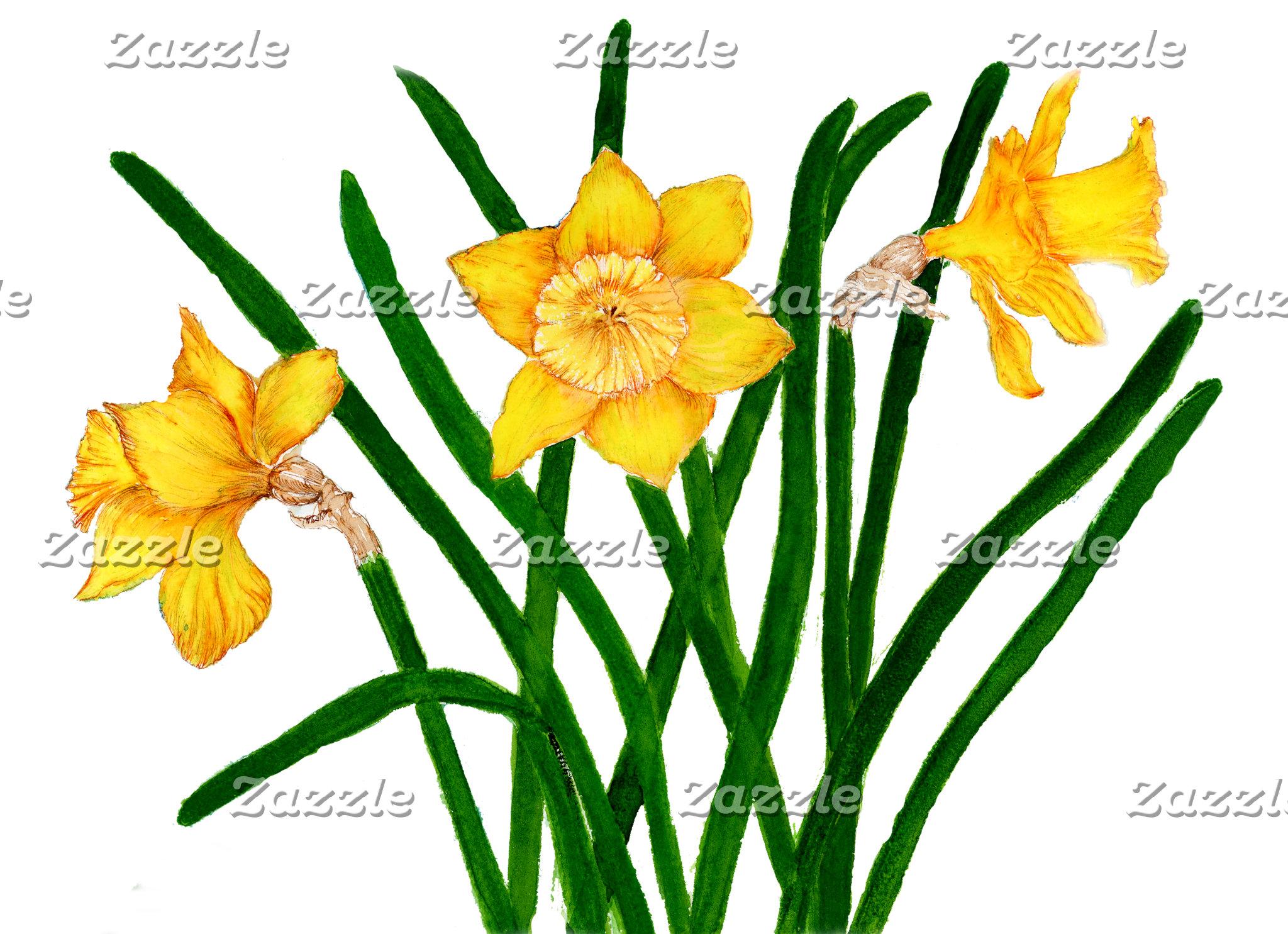 Daffodils Watercolour Artwork
