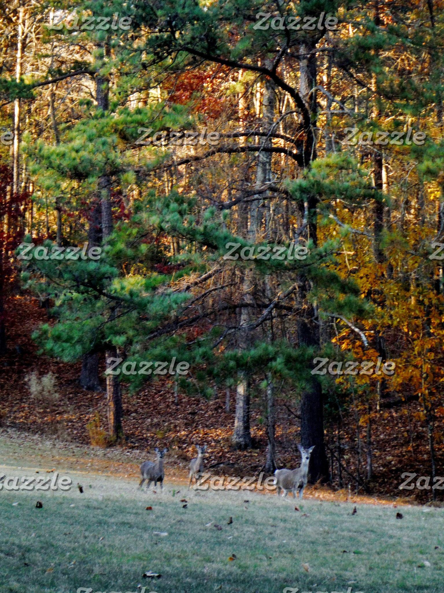 Autumn Deer in the distance
