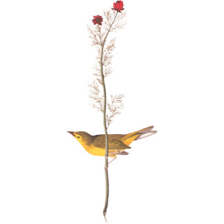Hooded Warbler (Plate 9)