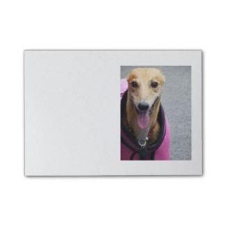 Greyhound post it notes