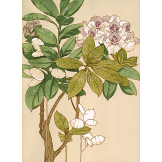"""Magnolia Tree Flowers Poster Print"""