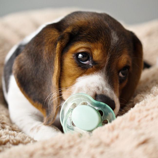 Cutest Baby Animals