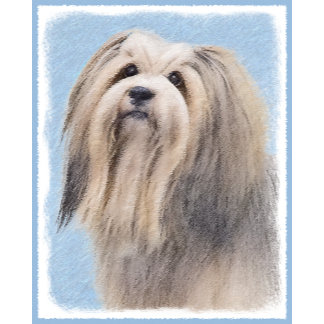 Havanese (Long Hair)