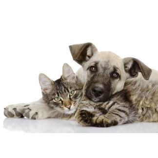 Unique Pet Designs