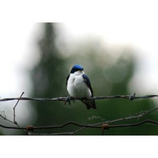 Birds A-M