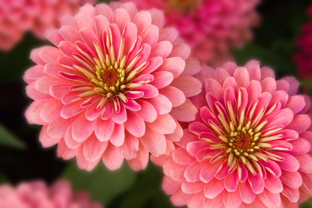 Flowers /Veggies
