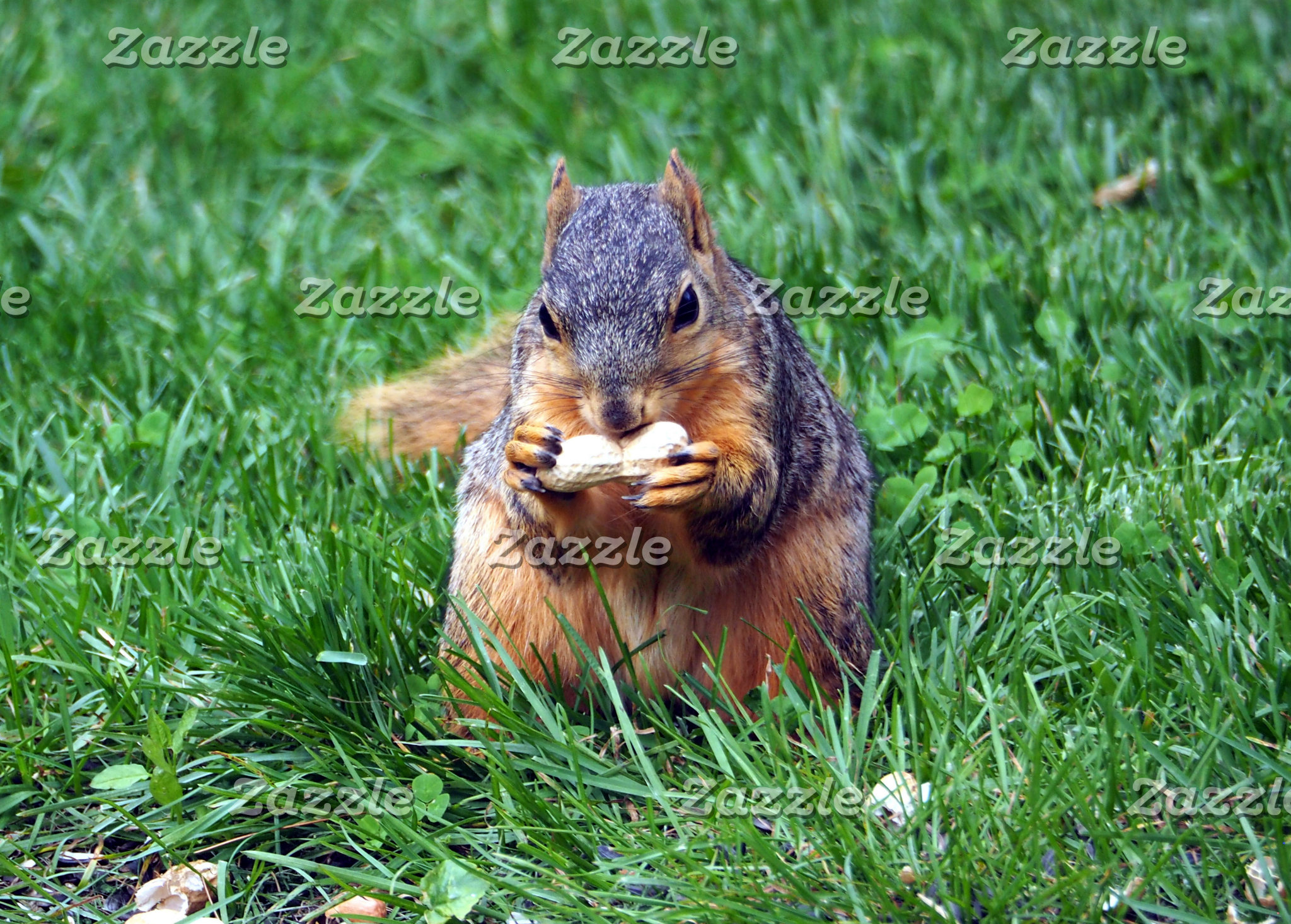 Squirrel 967