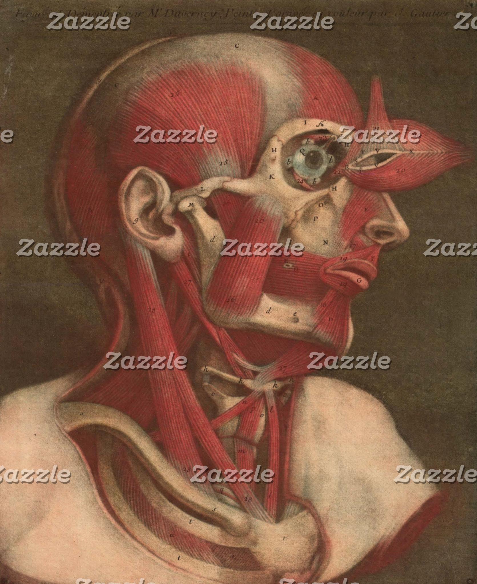 Vintage Anatomy | Head II