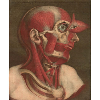 Vintage Anatomy | Head II
