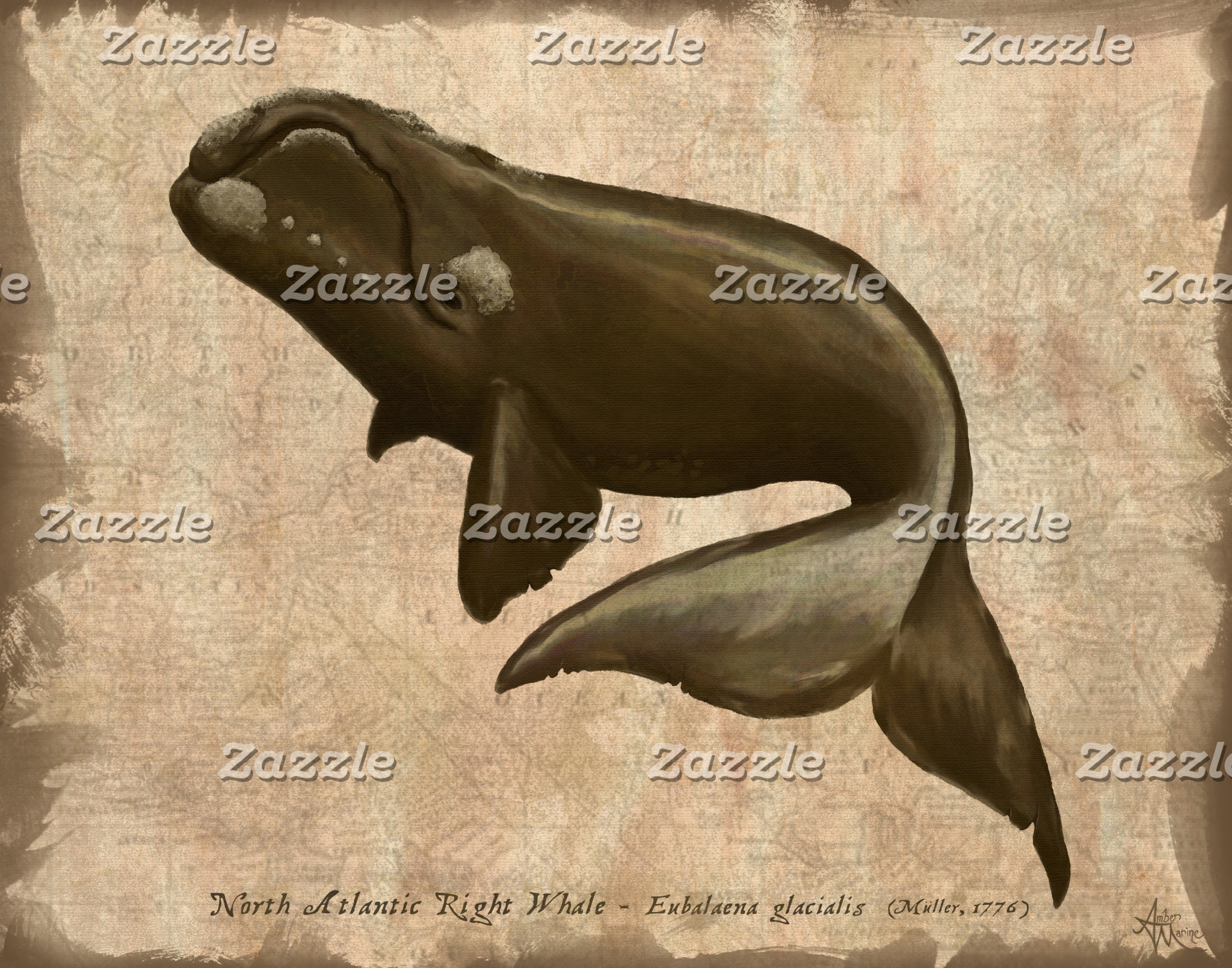 Art: North Atlantic Right Whale