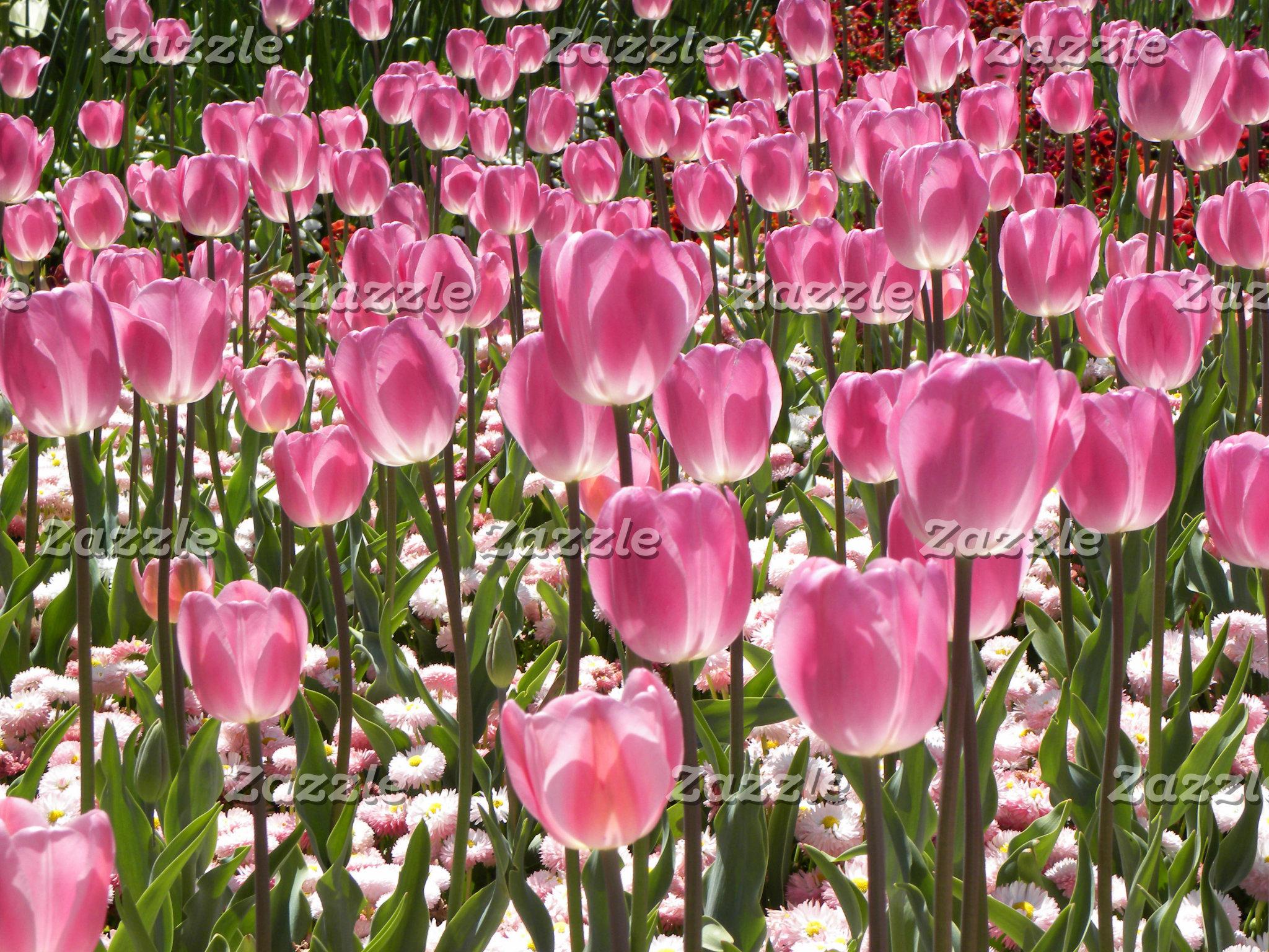 Canberra: Spring