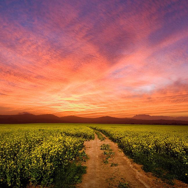 Brilliant Sunset Over Farmland