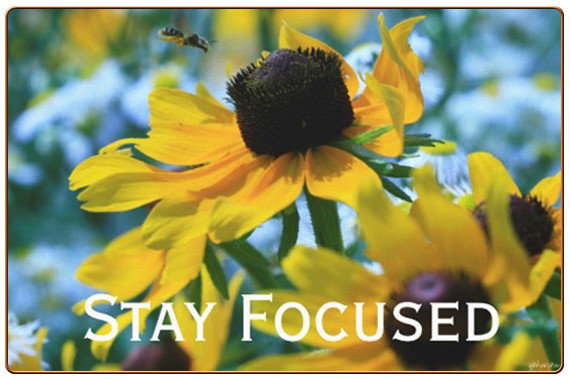 Stay Focused Quote Daisies Photo