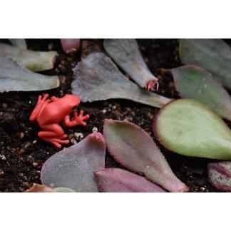 Frog Garden
