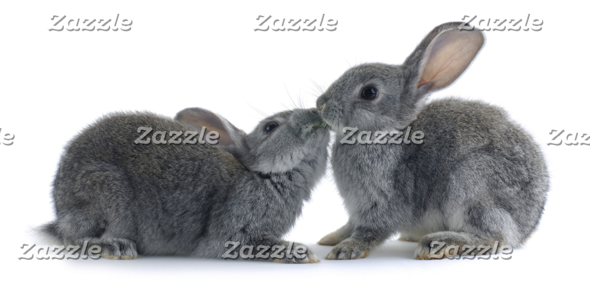 Rabbit Kiss