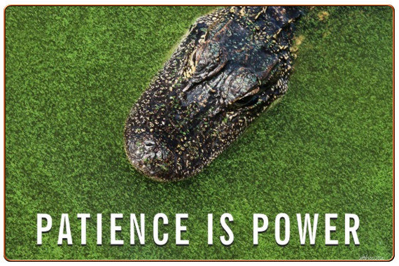 Patience is Power Quote • Florida Alligator