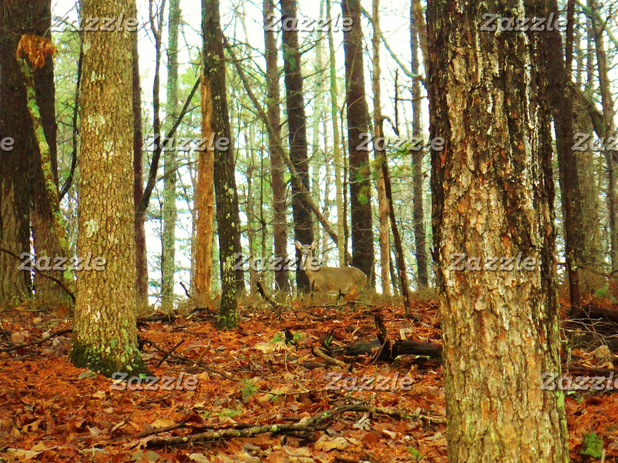 Deer in the Misty Pines