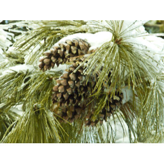 Pinecones in Snow