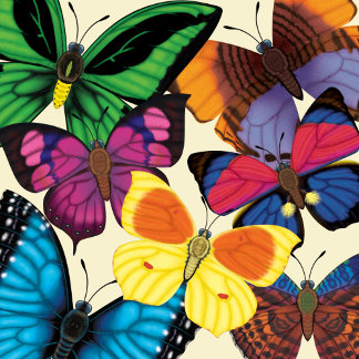 Butterflies of the World
