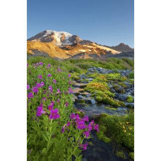USA, Mt. Rainier National Park, Washington.