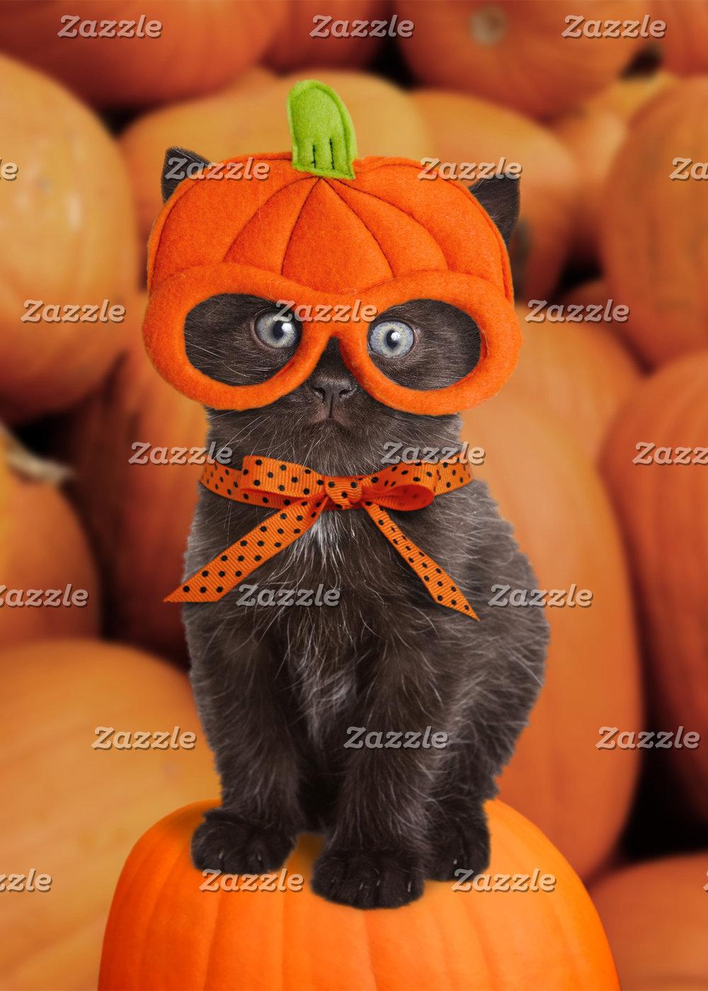 Pumpkin Kitten Cards & Gifts