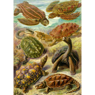 Ernst Haeckel Turtles Chelonia
