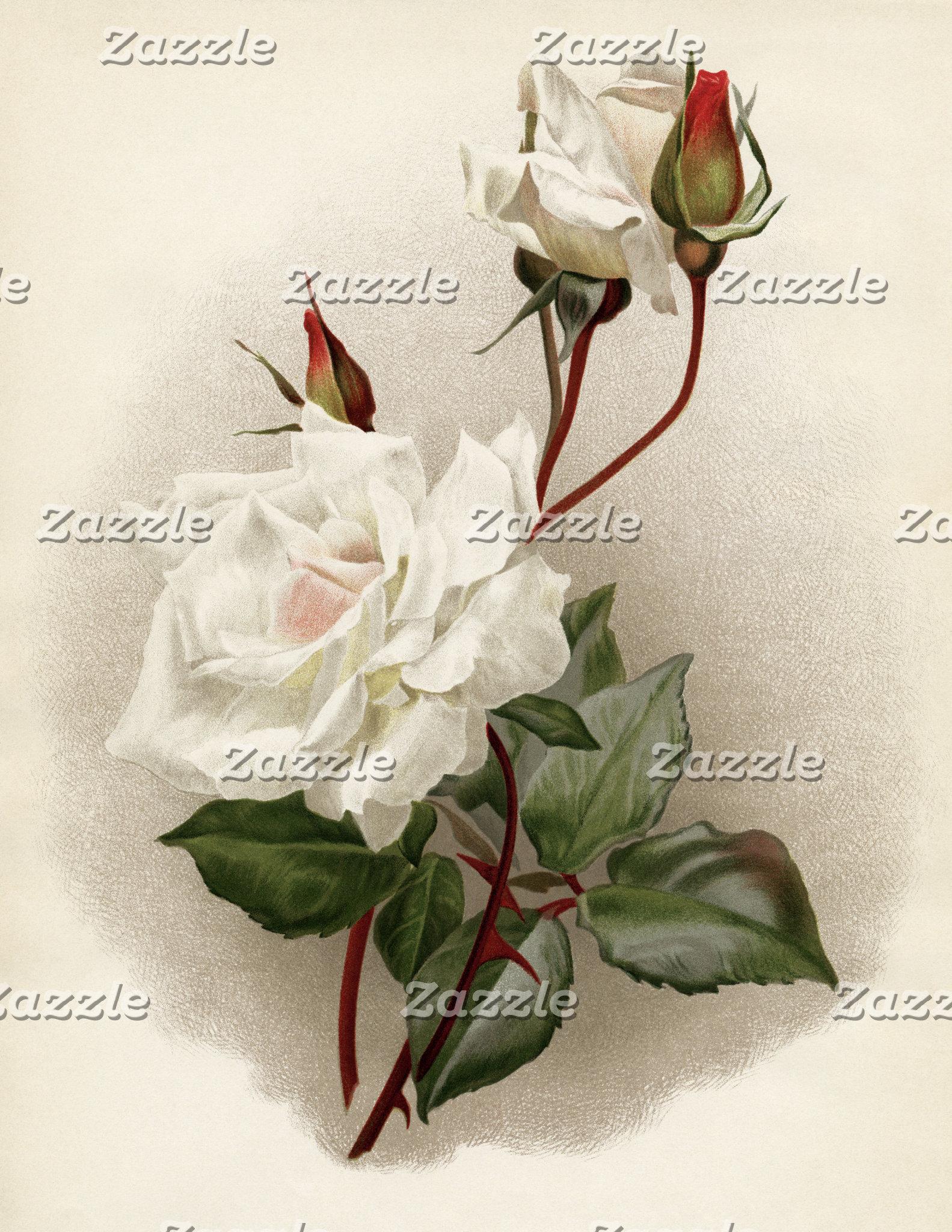 Vintage White Rose