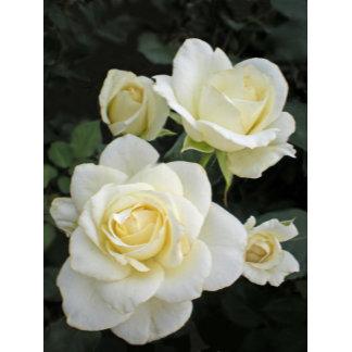 White Rose Designs