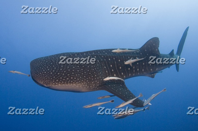 Whale Shark Items