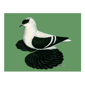 Swallow:  Saxon Black White Bar Postcard