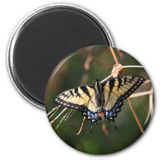 Swallow-Tail Butterfly Magnet