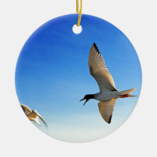Swallow tailed gull Galapagos Islands Ceramic Ornament