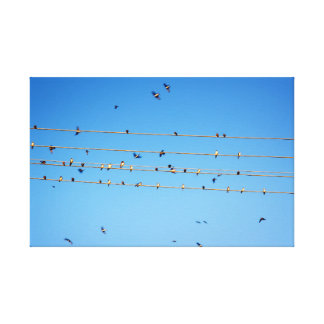 Swallows on wire canvas print