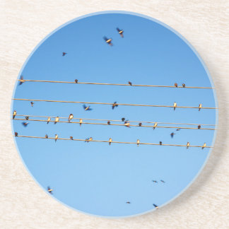 Swallows on wire coaster