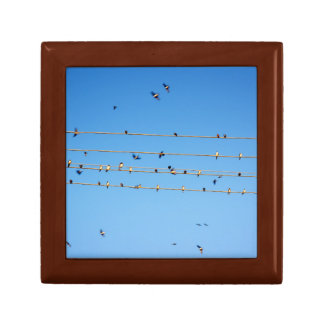 Swallows on wire gift box