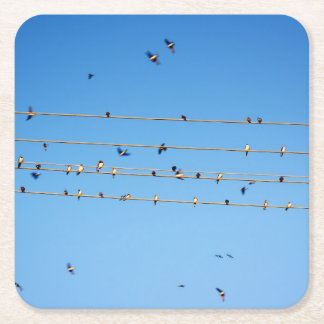 Swallows on wire square paper coaster