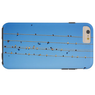 Swallows on wire tough iPhone 6 plus case