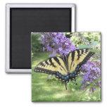 Swallowtail 94 ~ magnet