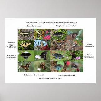 Swallowtail Butterflies of Southeastern Georgia Poster