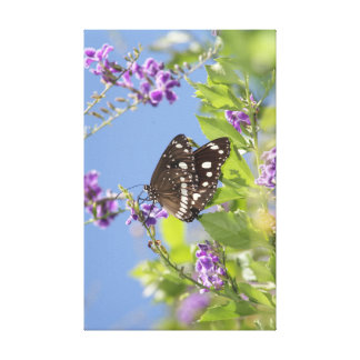 Swallowtail Butterfly Canvas Prints