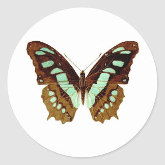 Swallowtail Butterfly Drawing Round Sticker