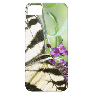 Swallowtail Butterfly Flower Floral Wildlife iPhone 5 Cases